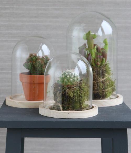 cloche en verre avec socle en bois h 13 cm 12 cm. Black Bedroom Furniture Sets. Home Design Ideas