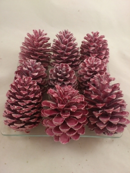Pinus maritima dark red wax