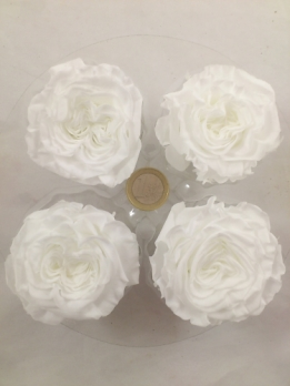 Preserved English gardenrose 4 p. L ø 5-5.5 cm pure white